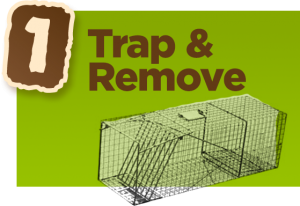 trap-and-remove-image