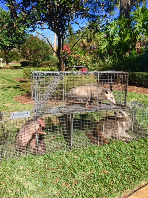 Trifecta In Palm Coast Animal Control Services Inc