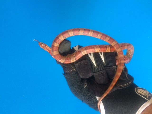 Snake In Port Orange Animal Control Services Inc