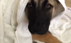 Nola says to Enjoy your weekend! Make sure you get your bath!